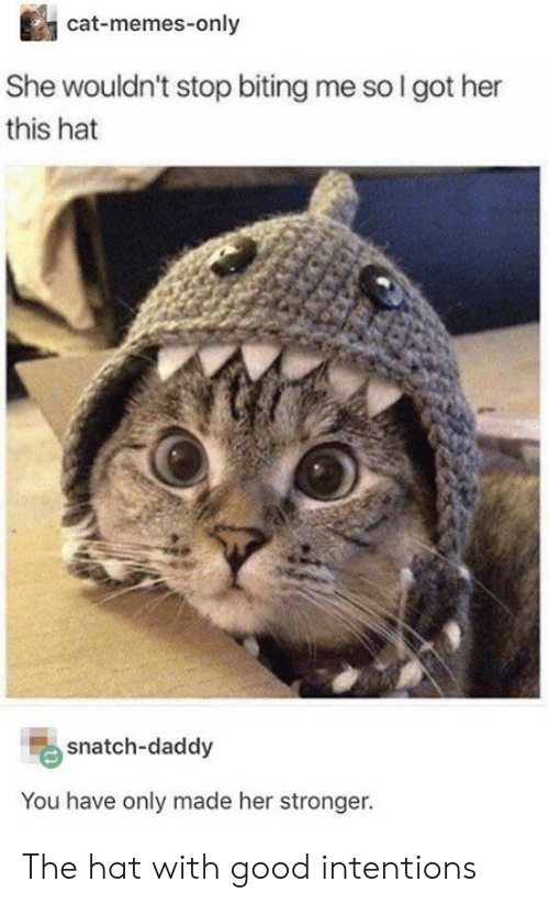 biting: cat-memes-only  She wouldn't stop biting me so I got her  this hat  snatch-daddy  You have only made her stronger. The hat with good intentions