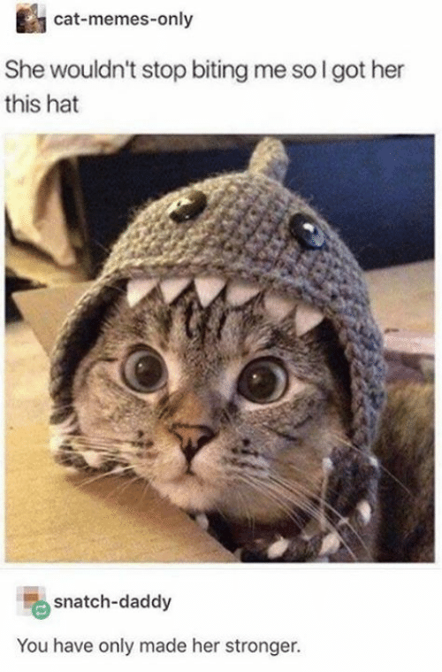 biting: cat-memes-only  She wouldn't stop biting me so I got her  this hat  snatch-daddy  You have only made her stronger.