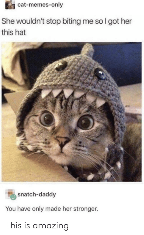Memes, Amazing, and Got: cat-memes-only  She wouldn't stop biting me so I got her  this hat  snatch-daddy  You have only made her stronger. This is amazing