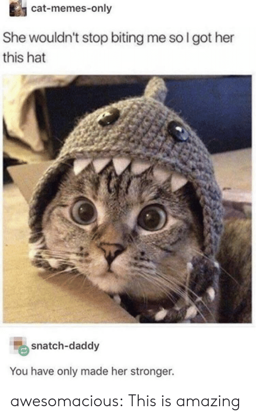 biting: cat-memes-only  She wouldn't stop biting me so I got her  this hat  snatch-daddy  You have only made her stronger. awesomacious:  This is amazing