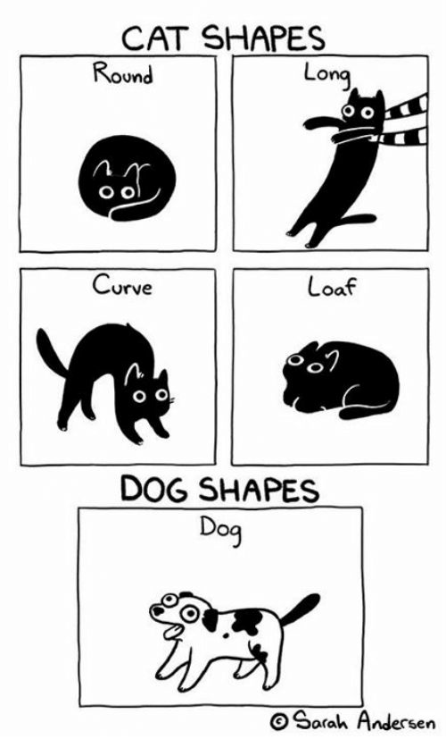 Curving, Memes, and 🤖: CAT SHAPES  Round  Lona  Curve  Loaf  O o  n.  O o  DOG SHAPES  Dog  O Sarah Andersen