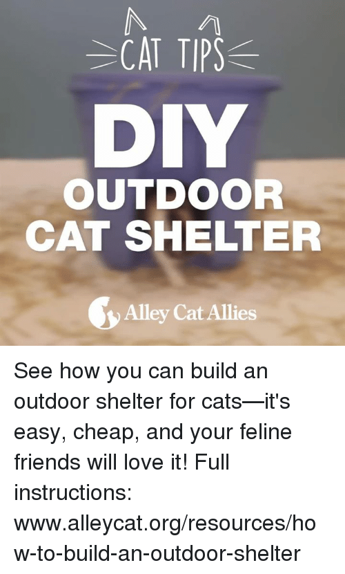 alley cats: CAT TIP  DIY  OUTDOOR  CAT SHELTER  Alley Cat Allies See how you can build an outdoor shelter for cats—it's easy, cheap, and your feline friends will love it!   Full instructions: www.alleycat.org/resources/how-to-build-an-outdoor-shelter