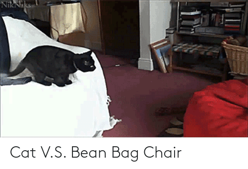 Chair: Cat V.S. Bean Bag Chair