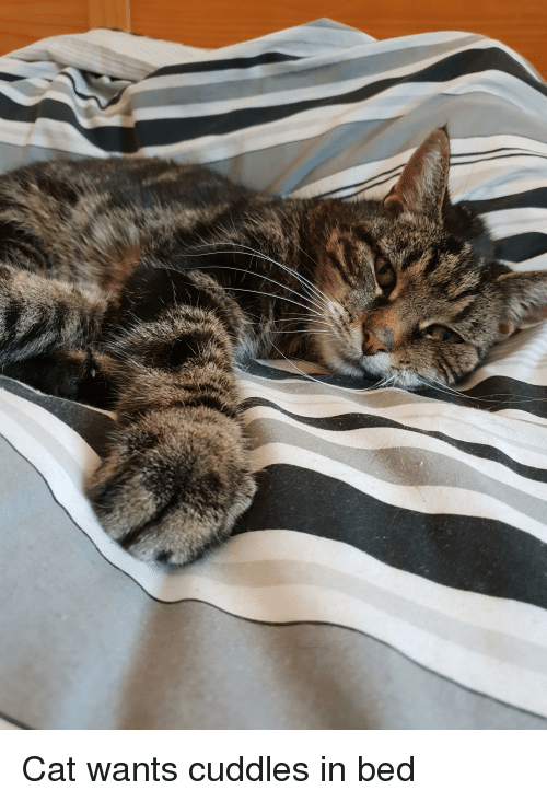 Cat, Bed, and Cuddles