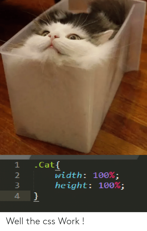 Work, Cat, and Css: .Cat{  width: 100% ;  height: 100%;  }  1 Well the css Work !