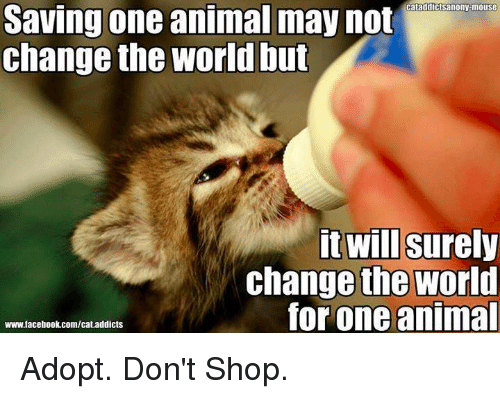 Animals, Facebook, and Memes: cataddictsanony mouse  Saving one animal may not  Change the World Out  it wil Surely  change the world  for one animal  www.facebook.com/cat.addicts Adopt. Don't Shop.