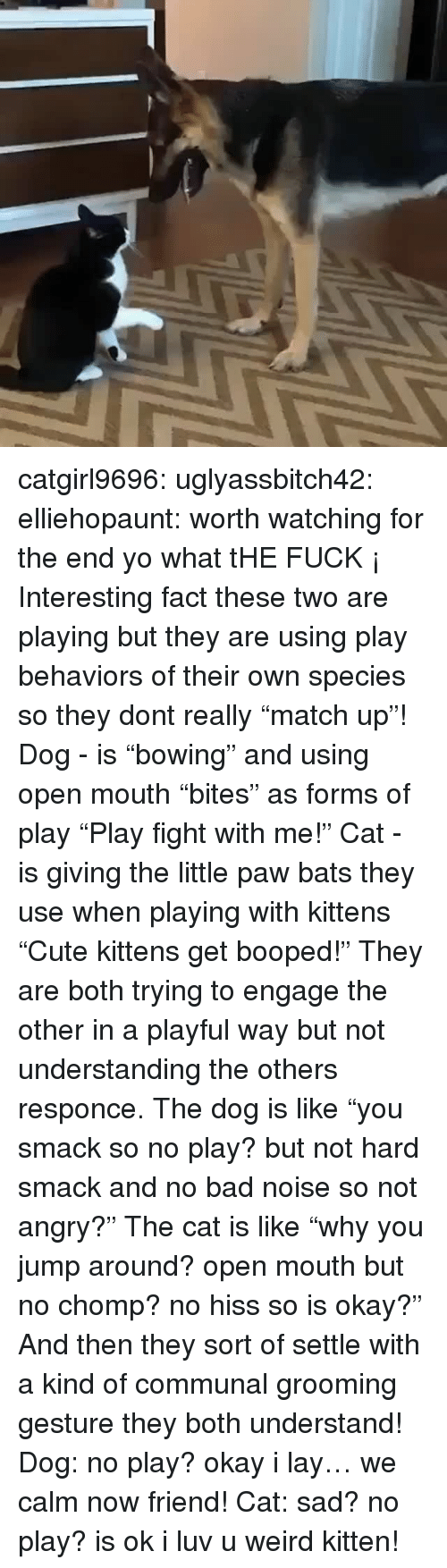 """chomp: catgirl9696: uglyassbitch42:  elliehopaunt: worth watching for the end  yo what tHE FUCK ¡   Interesting fact these two are playing but they are using play behaviors of their own species so they dont really """"match up""""! Dog - is """"bowing"""" and using open mouth """"bites"""" as forms of play  """"Play fight with me!"""" Cat - is giving the little paw bats they use when playing with kittens """"Cute kittens get booped!"""" They are both trying to engage the other in a playful way but not understanding the others responce. The dog is like """"you smack so no play? but not hard smack and no bad noise so not angry?"""" The cat is like """"why you jump around? open mouth but no chomp? no hiss so is okay?"""" And then they sort of settle with a kind of communal grooming gesture they both understand! Dog: no play? okay i lay… we calm now friend! Cat: sad? no play? is ok i luv u weird kitten!"""