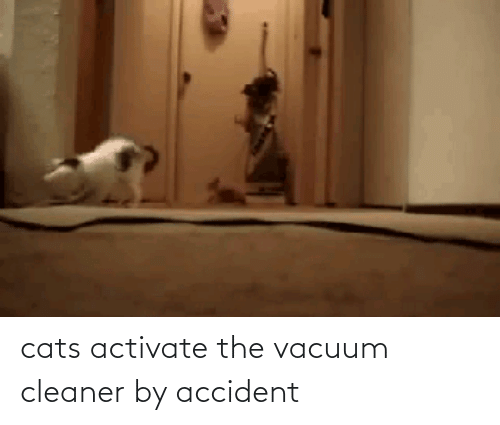 cleaner: cats activate the vacuum cleaner by accident