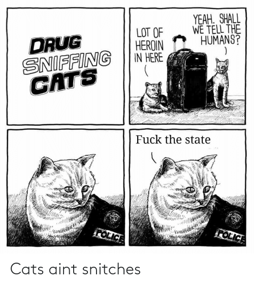 Cats: Cats aint snitches