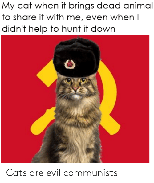 Cats: Cats are evil communists