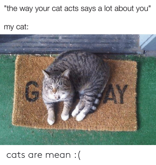 Cats: cats are mean :(