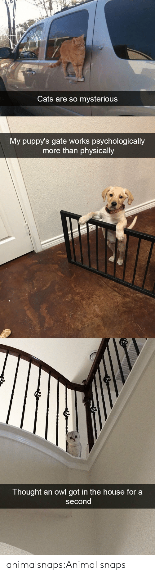 gate: Cats are so mysterious   My puppy's gate works psychologically  more than physically   Thought an owl got in the house for a  second animalsnaps:Animal snaps