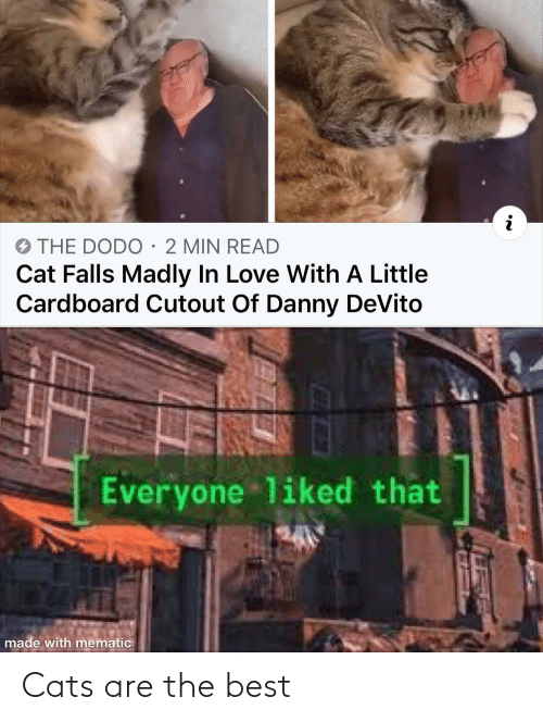 Cats: Cats are the best