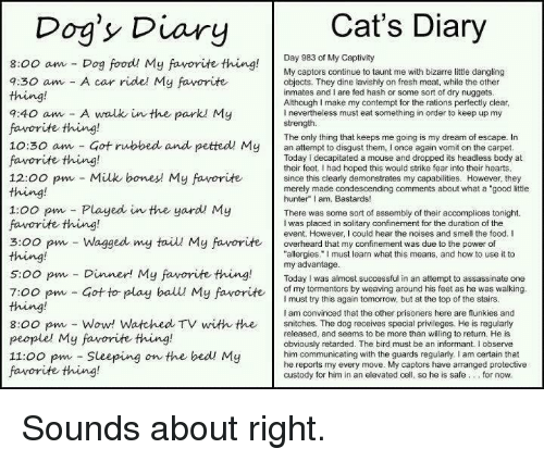 """Contemption: Cat's Diary  Dog's Diary  Day 983 of My Captivity  8:00 am Dog food! My favorite thing  My captors continue to taunt me with bizarre little dangling  a:30 am A car ride! My favorite  objects. They dine lavishly on fresh meat, while the other  inmates and I are fed hash or some sort of dry nuggets  Although make my contempt for the rations perfectly clear  9:40 am A walk in the parkl My  nevertheless must eat something in order to keep up my  strength.  favorite thing!  The only thing that keeps me going is my dream of escape. In  10:30 am Got rubbed and petted My  an attempt to disgust them, l once again vomit on the carpet  favorite thing!  Today decapitated a mouse and dropped its headless body at  their feet. Ihad hoped this would strike fear into their hearts  12:00 pm Milk bones My favorite  since this clearly demonstrates my capabilities. However, they  merely made condescending comments about what a """"good little  hunter"""" I am, Bastards!  1:00 pm Played in the yard My  There was some sort of assembly of their accomplices tonight.  favorite thing!  I was placed in solitary confinement for the duration of the  event. However, I could hear the noises and smell the food. I  3:00 pm Wagged my taiu My favorite overheard that my confinement was due to the power of  thing!  allergies."""" must learn what this means, and how to use it to  my advantage  5:00 pm Dinner! My favorite thing  Today was almost successful in an attempt to assassinate one  of my tormentors by weaving around his feet as he was walking  7:00 pm Got to play ball My favorite  I must try this again tomorrow, but at the top of the stairs  am convinced that the other prisoners here are flunkies and  8:00 pm Wow! Watched TV with the snitches. The dog receives special privileges. He is regularly  released, and seems to be more than willing to return. He is  people' My favorite thing!  obviously retarded. The bird must be an informant. I observe  11:00 pm Sleeping  on the bed! My  him communica"""