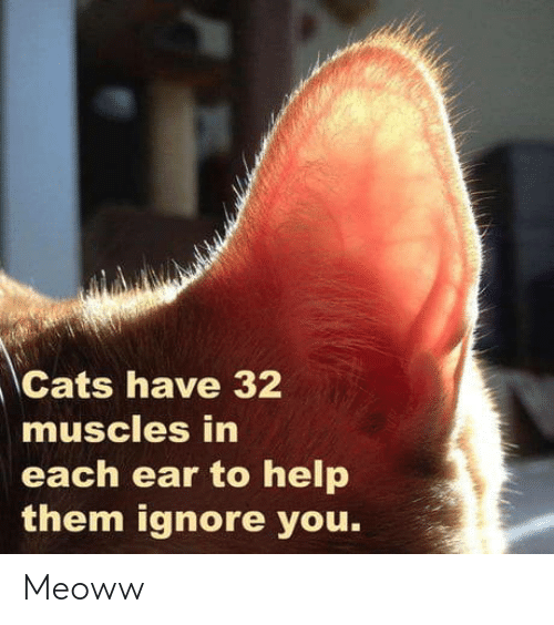 Cats: Cats have 32  muscles in  each ear to help  them ignore you. Meoww