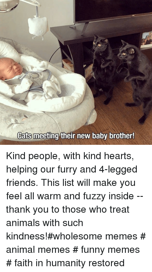 faith in humanity restored: Cats meeting their new baby brother! Kind people, with kind hearts, helping our furry and 4-legged friends. This list will make you feel all warm and fuzzy inside -- thank you to those who treat animals with such kindness!#wholesome memes # animal memes # funny memes # faith in humanity restored