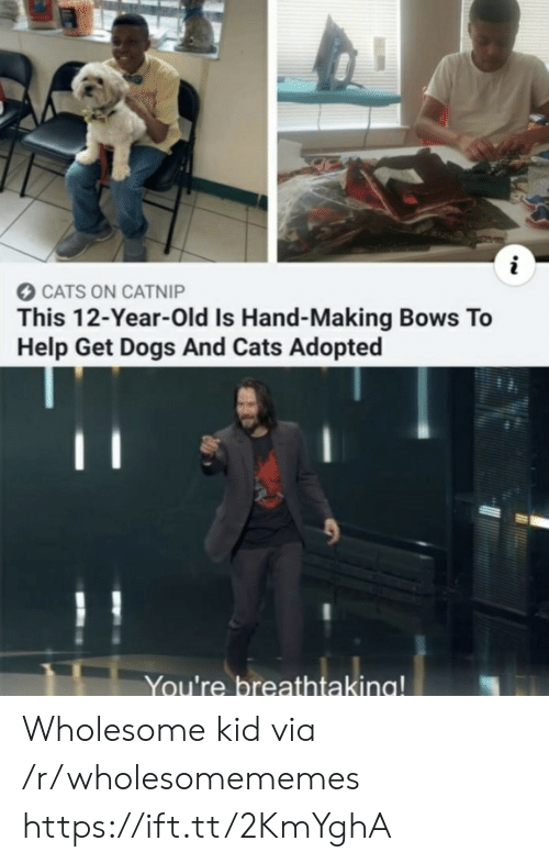 12 Year Old: CATS ON CATNIP  This 12-Year-Old Is Hand-Making Bows To  Help Get Dogs And Cats Adopted  You're breathtaking! Wholesome kid via /r/wholesomememes https://ift.tt/2KmYghA