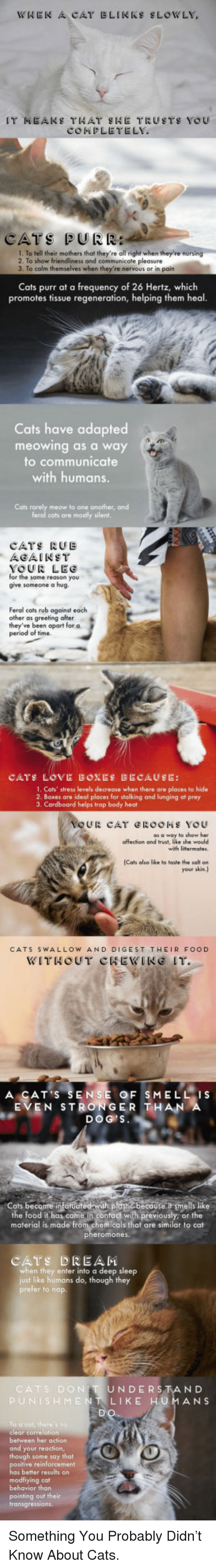 Cats, Food, and Stalking: CATS PURR  1. To tell their mothers that they're all right when they're  2. To show friendliness and  3. To calm themselves when they re nervous or in pain  pleasure  Cats purr at a frequency of 26 Hertz, whiclh  promotes tissue regeneration, helping them heal.  Cats have adapted  meowing as a way  to communicate  with humans.  Cats rarely meow to one another, and  cats are mosly silent,  CATS RUE  AGAINST  YOUR LEC  for the same reason you  give someone a hug.  Feral cats rub against each  other as greeting after  they've been apart for a  1. Cats' stress levels decrease when there are places to hide  2. Boxes are ideal places for stalking and lunging at prey  3. Cardboard helps trap body heat  as a way to show hee  affection and trust, like she would  Cats also like to tashe the salt on  your skin. }  CATS SWALLOW AND DIGEST THEIR FOOD  WITHOUT CHEWINE IT.  A CAT S SENSE OF SMELLIS  EVEN STRONGER THAN  DOG S  the food it has come in contact with previously, or the  material is made from chemicals that are similar to cat  CATS DREAM  when they enter into a deep sleep  just like humans do, though they  prefer to nap.  UNDERSTAND  ENTLIKE HUMANS  behween her action  and your reaction  ay that  has better results on  pointing out their <p>Something You Probably Didn't Know About Cats.</p>