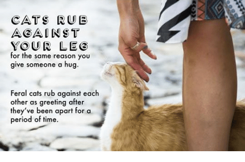 get rid of cat spray smell in house