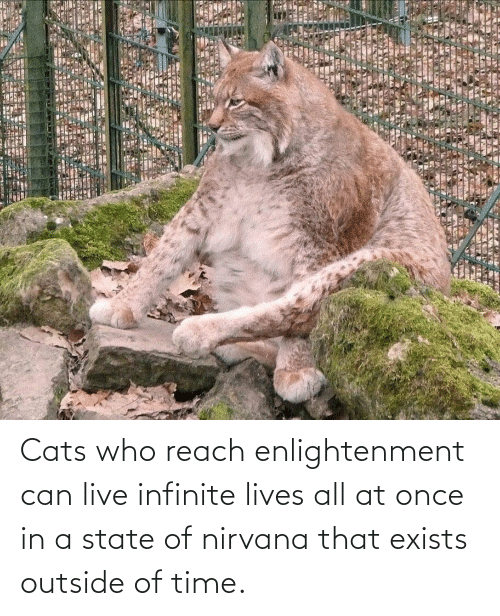 Outside Of: Cats who reach enlightenment can live infinite lives all at once in a state of nirvana that exists outside of time.
