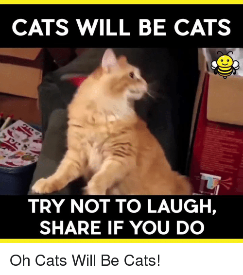 try not to laugh: CATS WILL BE CATS  TRY NOT TO LAUGH,  SHARE IF YOU DO Oh Cats Will Be Cats!