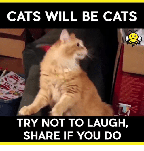 try not to laugh: CATS WILL BE CATS  TRY NOT TO LAUGH,  SHARE IF YOU DO