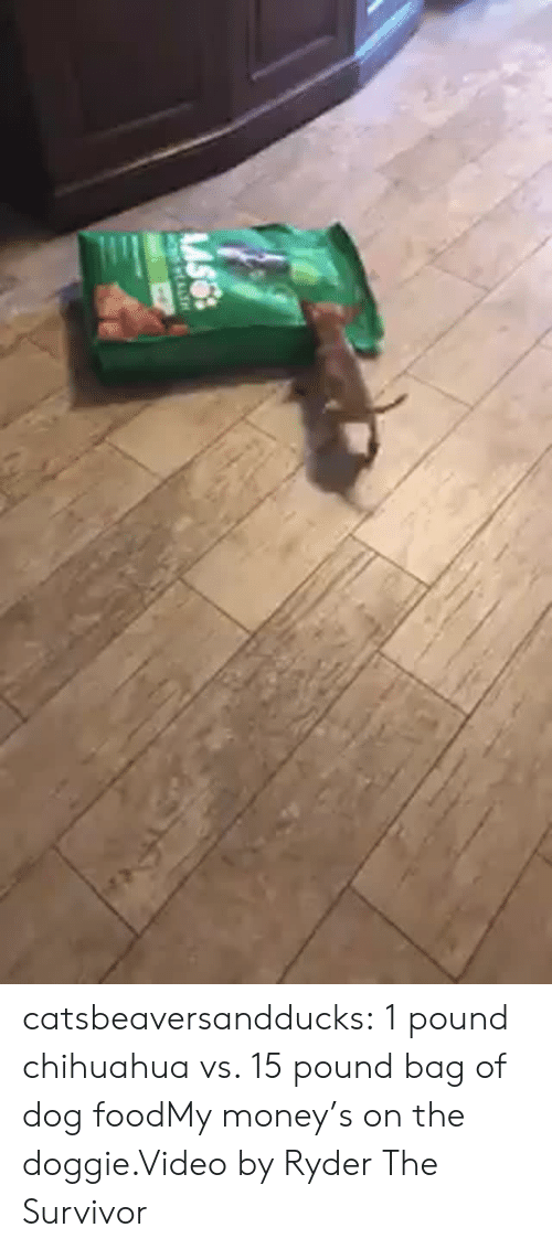Chihuahua, Food, and Instagram: catsbeaversandducks:  1 pound chihuahua vs. 15 pound bag of dog foodMy money's on the doggie.Video by Ryder The Survivor