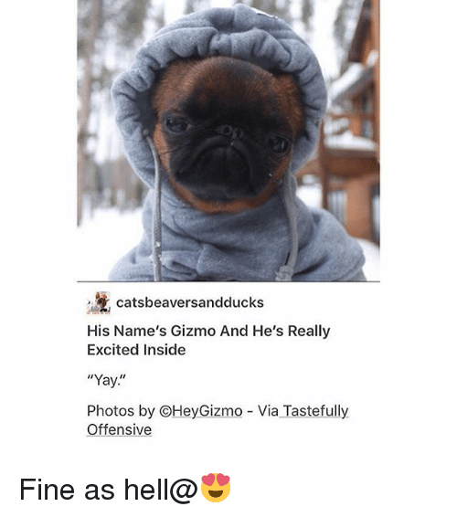 """tastefully offensive: catsbeaversandducks  His Name's Gizmo And He's Really  Excited Inside  """"Yay  Photos by OHeyGizmo Via Tastefully  Offensive Fine as hell@😍"""