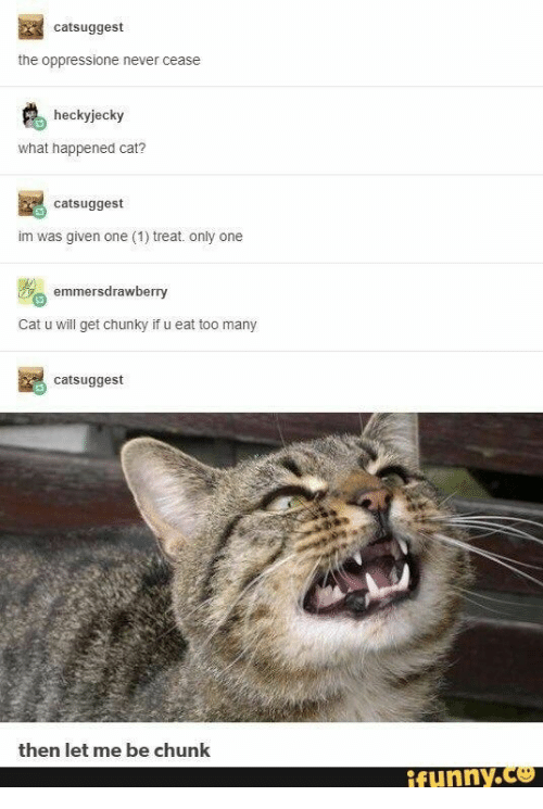Never, Only One, and Cat: catsuggest  the oppressione never cease  heckyjecky  what happened cat?  catsuggest  im was given one (1) treat. only one  emmersdrawberry  Cat u will get chunky if u eat too many  catsuggest  then let me be chunk  ifunny.co