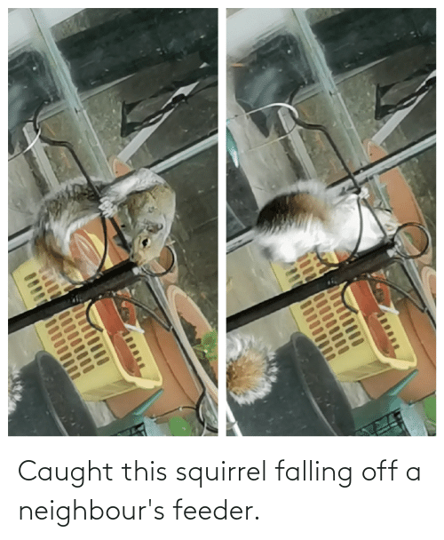 falling: Caught this squirrel falling off a neighbour's feeder.