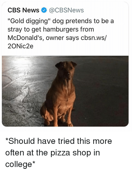 "College, McDonalds, and Memes: CBS News@CBSNews  ""Gold digging"" dog pretends to be a  stray to get hamburgers from  McDonald's, owner says cbsn.ws/  2ONic2e *Should have tried this more often at the pizza shop in college*"