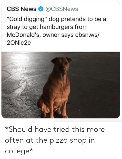 "College, McDonalds, and News: CBS News@CBSNews  ""Gold digging"" dog pretends to be a  stray to get hamburgers from  McDonald's, owner says cbsn.ws/  2ONic2e *Should have tried this more often at the pizza shop in college*"