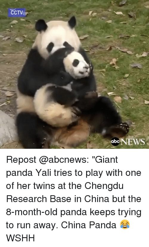 "giant panda: CCTV  abc  NEWS Repost @abcnews: ""Giant panda Yali tries to play with one of her twins at the Chengdu Research Base in China but the 8-month-old panda keeps trying to run away. China Panda 😂 WSHH"