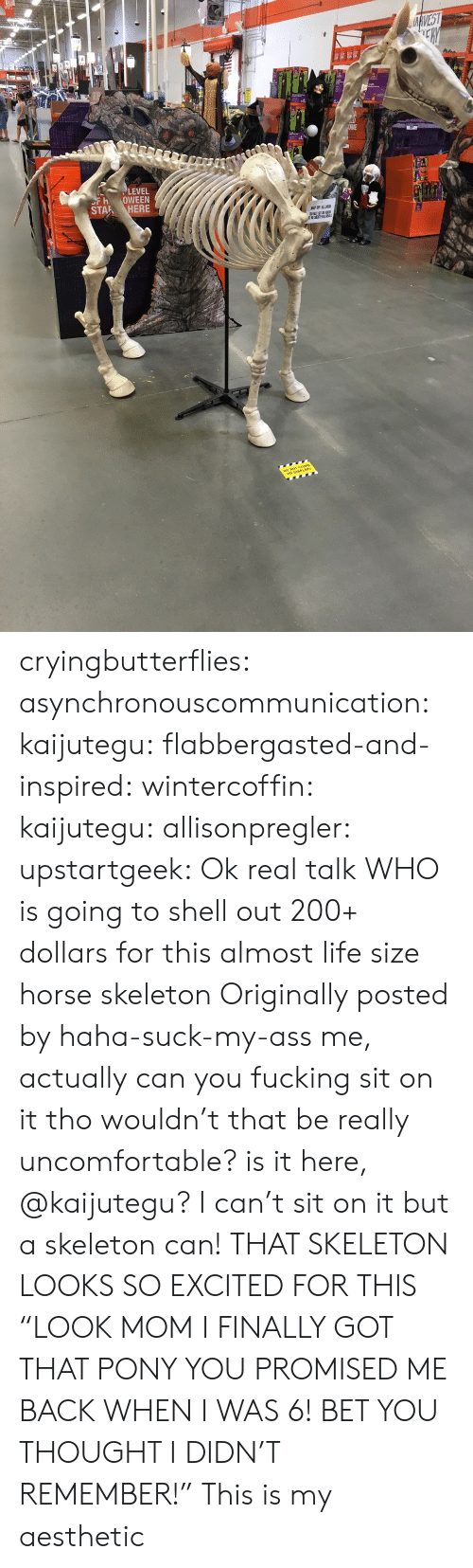 """Ass, Bailey Jay, and Fucking: ce  LEVEL  FH OWEEN  STAR ? HERE cryingbutterflies:  asynchronouscommunication:  kaijutegu:  flabbergasted-and-inspired:  wintercoffin:  kaijutegu:  allisonpregler:  upstartgeek:  Ok real talk WHO is going to shell out 200+ dollars for this almost life size horse skeleton  Originally posted by haha-suck-my-ass  me, actually  can you fucking sit on it tho  wouldn't that be really uncomfortable? is it here, @kaijutegu?  I can't sit on it but a skeleton can!  THAT SKELETON LOOKS SO EXCITED FOR THIS  """"LOOK MOM I FINALLY GOT THAT PONY YOU PROMISED ME BACK WHEN I WAS 6! BET YOU THOUGHT I DIDN'T REMEMBER!""""   This is my aesthetic"""