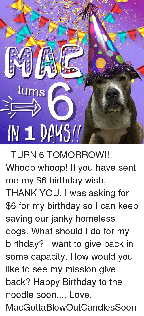 birthday wish: CE  O  turns  /Pーーーーーーーー I TURN 6 TOMORROW!! Whoop whoop! If you have sent me my $6 birthday wish, THANK YOU. I was asking for $6 for my birthday so I can keep saving our janky homeless dogs. What should I do for my birthday? I want to give back in some capacity. How would you like to see my mission give back?   Happy Birthday to the noodle soon....   Love, MacGottaBlowOutCandlesSoon