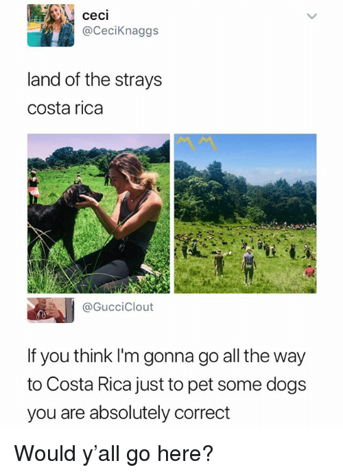 Dogs, Costa Rica, and Dank Memes: ceci  @CeciKnaggs  land of the strays  costa rica  @GucciClout  If you think I'm gonna go all the way  to Costa Rica just to pet some dogs  you are absolutely correct Would y'all go here?