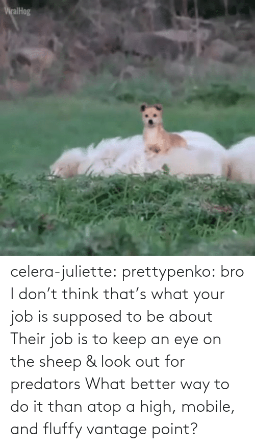 dont: celera-juliette:  prettypenko: bro I don't think that's what your job is supposed to be about    Their job is to keep an eye on the sheep & look out for predators What better way to do it than atop a high, mobile, and fluffy vantage point?