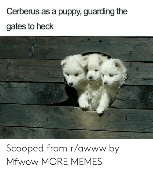 Dank, Memes, and Target: Cerberus as a puppy, guarding the  gates to heck Scooped from r/awww by Mfwow MORE MEMES
