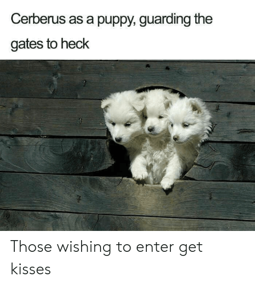 Puppy, The Gates, and Cerberus: Cerberus as a puppy, guarding the  gates to heck Those wishing to enter get kisses