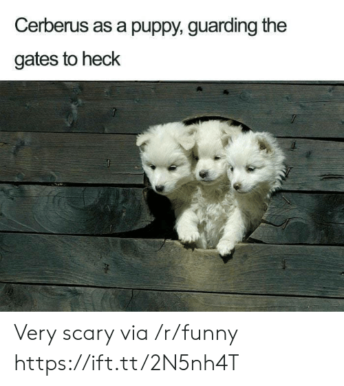 Funny, Puppy, and The Gates: Cerberus as a puppy, guarding the  gates to heck Very scary via /r/funny https://ift.tt/2N5nh4T
