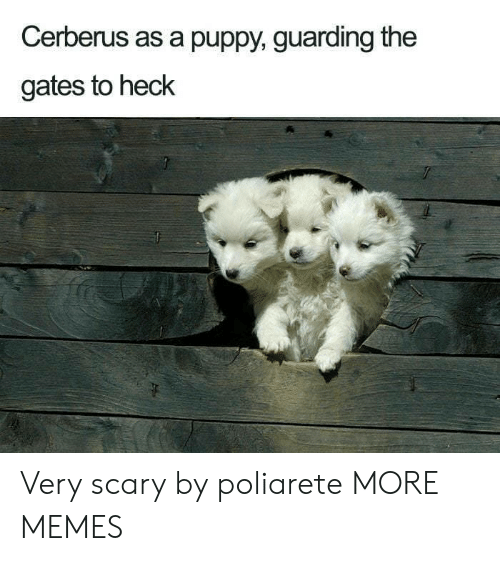 Dank, Memes, and Target: Cerberus as a puppy, guarding the  gates to heck Very scary by poliarete MORE MEMES