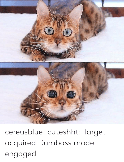 engaged: cereusblue: cuteshht: Target acquired  Dumbass mode engaged