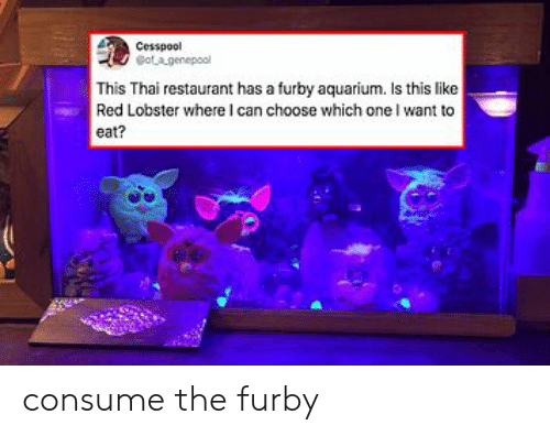 lobster: Cesspool  otagenepool  This Thai restaurant has a furby aquarium. Is this like  Red Lobster where I can choose which one I want to  eat? consume the furby