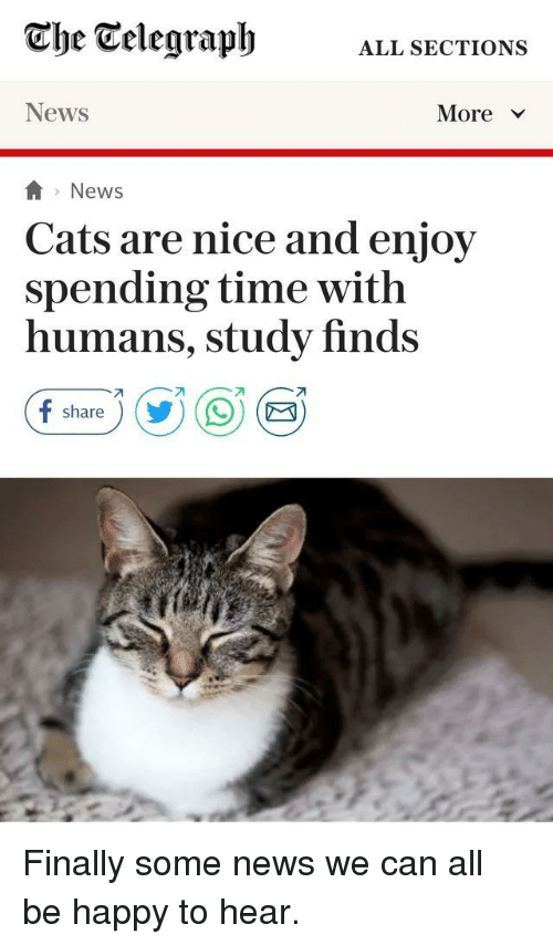 Telegraph: Che Telegraph  ALL SECTIONS  News  More >Y  >News  Cats are nice and enjoy  spending time with  humans, study finds  99 B)  share Finally some news we can all be happy to hear.
