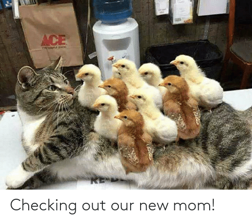 new: Checking out our new mom!