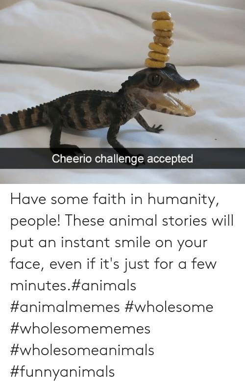 Faith In Humanity: Cheerio challenge accepted Have some faith in humanity, people! These animal stories will put an instant smile on your face, even if it's just for a few minutes.#animals #animalmemes #wholesome #wholesomememes #wholesomeanimals #funnyanimals