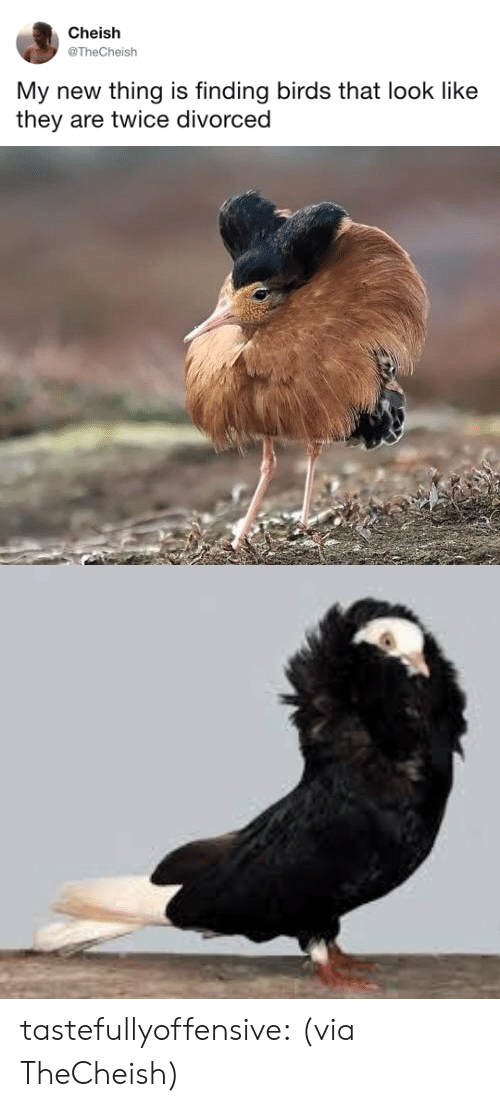 tastefullyoffensive: Cheish  @TheCheish  My new thing is finding birds that look like  they are twice divorced tastefullyoffensive:  (via TheCheish)