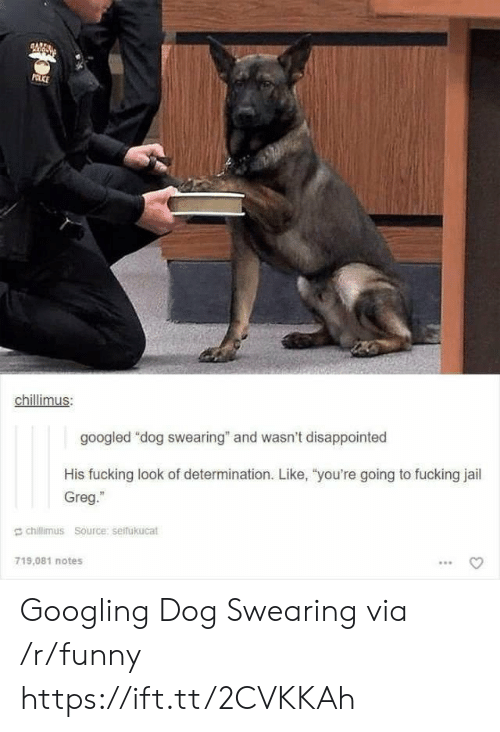 """Disappointed, Fucking, and Funny: chillimus  googled """"dog swearing"""" and wasn't disappointed  His fucking look of determination. Like, """"you're going to fucking jail  Greg.""""  g chillimus Source: seifukucat  719,081 notes Googling Dog Swearing via /r/funny https://ift.tt/2CVKKAh"""