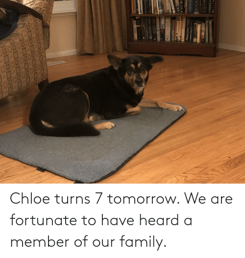 fortunate: Chloe turns 7 tomorrow. We are fortunate to have heard a member of our family.