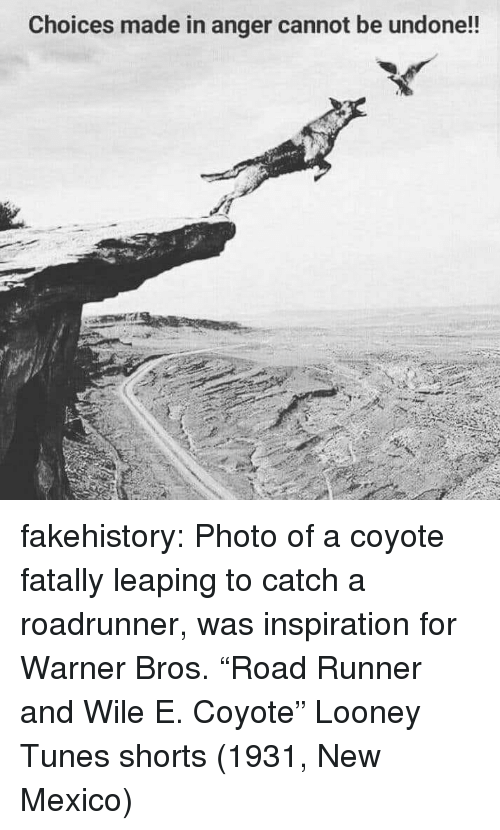 "tunes: Choices made in anger cannot be undone!! fakehistory:  Photo of a coyote fatally leaping to catch a roadrunner, was inspiration for Warner Bros. ""Road Runner and Wile E. Coyote"" Looney Tunes shorts (1931, New Mexico)"